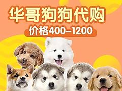 华哥萌宠直播间_华哥萌宠视频全集 - China直播视频