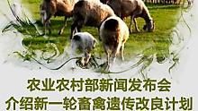 4.28新一轮畜禽遗传改良计划发布会